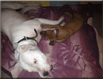 amazon hundebetten