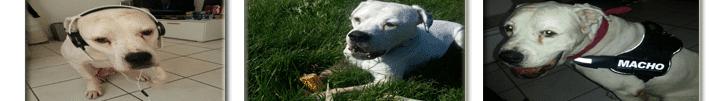hundeabsperrgitter test hunde