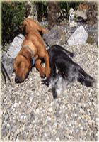 hundebett größe für rhodesian ridgeback