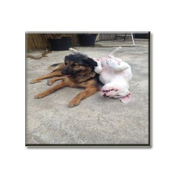 Hundebett-dogg.de_Jacky-Luna