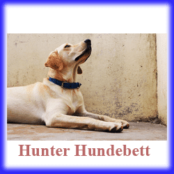 hunter hundebett