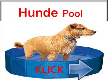 Hundepool Erfrischung