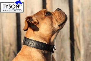 hundehalsband leder breit 1