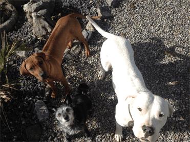 tragzeit hund