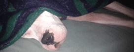 Hundebett kaufen : Luna
