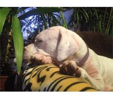 Hundebett kaufen : Luna testet
