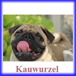 kauwurzel für Hunde