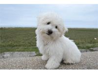 Tragerucksack für Hunde bis 10kg