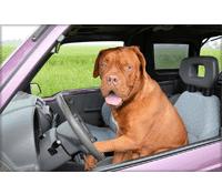 Hundeabsperrgitter für das Auto