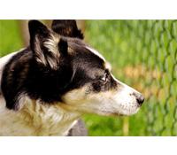 Hundeabsperrgitter für den Garten