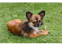 tragerucksack für hunde bis 15kg