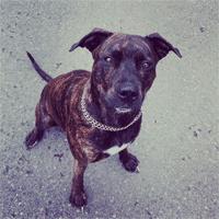 Tierchip Lesegerät für hunde