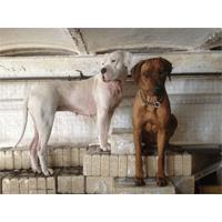 isolierte hundehütte für große Hunde