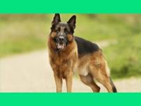 Orthopädische Hundecouch visko